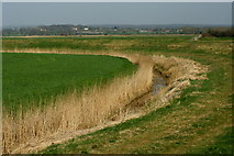 TQ0004 : Drainage Ditch, River Arun, Sussex by Peter Trimming