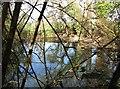 TL4150 : Hidden pond near Harston by John Sutton