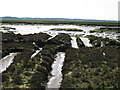 TQ8397 : Salt Marsh & Mudflats by Roger Jones
