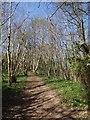 SX5157 : Path in Leigham Wood by Derek Harper