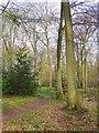 SU9399 : Path through woodland by Stefan Czapski
