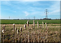 SU5686 : Bulrushes and Pylons by Des Blenkinsopp