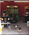 SX8274 : Peacocks at Trago Mills by Derek Harper