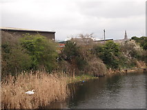SK5804 : Leicester - Grand Union Canal near Soar Lane by David Hallam-Jones