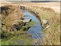 SX6071 : Sheep Leap over Devonport Leat by Tony Atkin