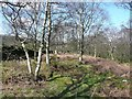 SE0022 : Path at the top of Higher House Wood, Cragg Vale, Mytholmroyd by Humphrey Bolton