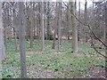 SJ7177 : Rinks Wood by Richard Webb