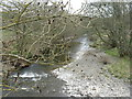 NT4510 : The River Teviot at Newmill by M J Richardson