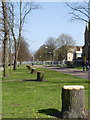 SK5738 : Tree stumps. Queens Walk (1) by Alan Murray-Rust
