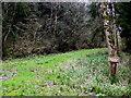 ST5109 : Pen Wood Trail by Nigel Mykura