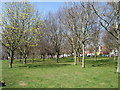 TQ2806 : Trees in Hove Park by Paul Gillett