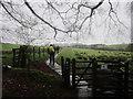 NY5965 : Walking east towards Birdoswald by Ian S