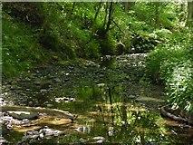 SD6205 : Borsdane Wood by Mark Gilligan
