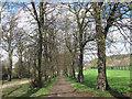 SK3686 : Norfolk Park: Lime Avenue by Stephen Craven