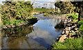J4152 : The Ballynahinch River near Crossgar by Albert Bridge