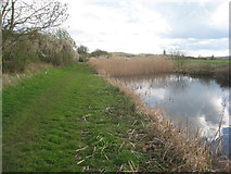 SK8336 : Blocked canal at Stenwith by Jonathan Thacker