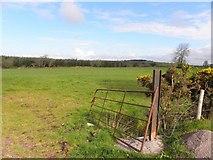 H5559 : Open field, Garvaghy by Kenneth  Allen