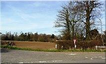 TM3669 : Abbey Road, Sibton, Suffolk by nick macneill
