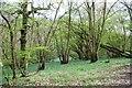 TQ4738 : Coomb Wood by Mark Lindsay-Bayley