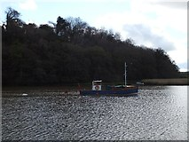 SX4268 : Small boat on the River Tamar at Cotehele Quay by David Smith