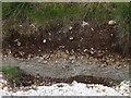 SU6949 : Downland Soil Profile, Upton Grey by Colin Smith