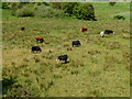 SU4726 : Winchester - Grazing Cows by Chris Talbot