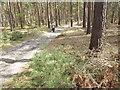 TQ0446 : Bridleway in Blackheath Forest by Colin Smith