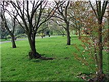 TQ3289 : Downhills Park by Christine Westerback