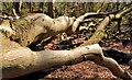 J4777 : Dead tree, Clandeboye, Bangor by Albert Bridge