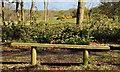 J4777 : Seat, Clandeboye, Bangor by Albert Bridge