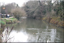 TR1558 : Great Stour by N Chadwick