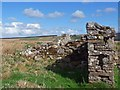 ND1644 : Ruins at Shinvall township, Caithness by Claire Pegrum