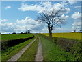 SK5069 : Track towards Scarcliffe by Andrew Hill