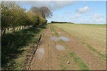 TF3873 : A muddy Public Bridleway to Sutterby Holt by J.Hannan-Briggs