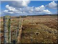 ND1645 : Fence near Shinvall, Caithness by Claire Pegrum