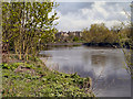 NS7993 : River Forth, Stirling by David Dixon