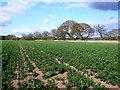SP2569 : Field at Kite's Nest Farm by Nigel Mykura
