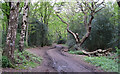 TQ4793 : Path to car park by Roger Jones