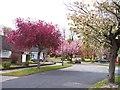 SJ4188 : Spring in suburbia by Raymond Knapman