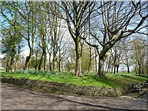SD8203 : Springtime trees in Heaton Park by Christine Johnstone