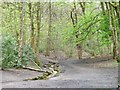 SD8204 : Small stream in Heaton Park by Christine Johnstone