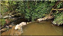 J4681 : Weir, Crawfordsburn by Albert Bridge