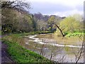 NU2405 : River Coquet from Mill Walk by Andrew Curtis