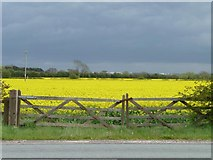 SK1515 : Double gate into oilseed rape field by Christine Johnstone