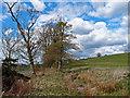NS4933 : Small Woodland and Farmland by wfmillar
