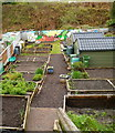 ST1190 : Aber Valley Community Allotment, Senghenydd by Jaggery