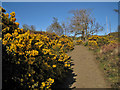 NG2549 : Good gorse by Richard Dorrell