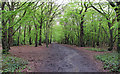 TQ4693 : Heading south on Three Forests Way by Roger Jones