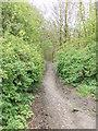 SE1228 : Footpath - Brow Lane by Betty Longbottom