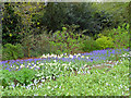 ST9701 : Spring Planting, Kingston Lacy, Dorset by Christine Matthews